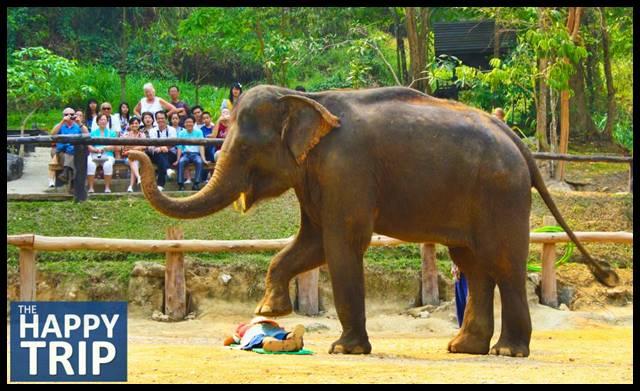 elephant edited 1