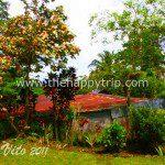 The Refreshing Buro-Buro Herb Farm