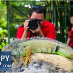 Davao Crocodile Farm: A Close Encounter With The Park's Superstars (Updated 2016)
