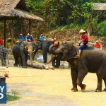 Chiang Mai, Thailand Part 10: Elephant Ride