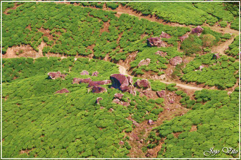 Suryanelli Camp, Munnar