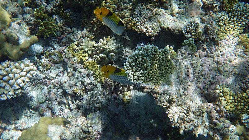 Maldives Trip: maldives by-laika-ac-from-uk