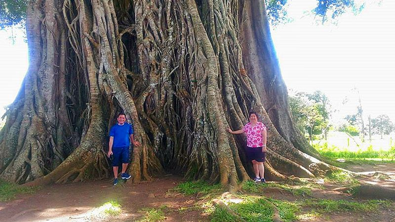CANLAON CITY , balete tree