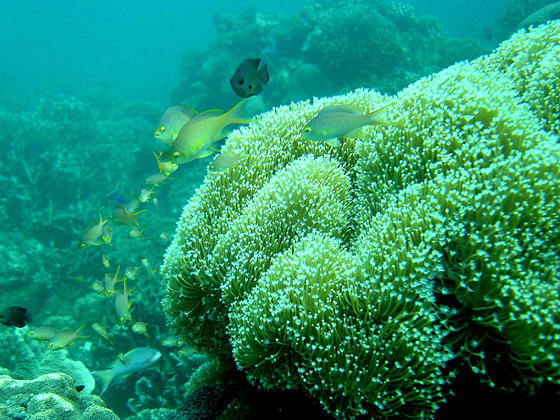 800px-moalboal_coral_reef, MOALBOAL CEBU RESORTS
