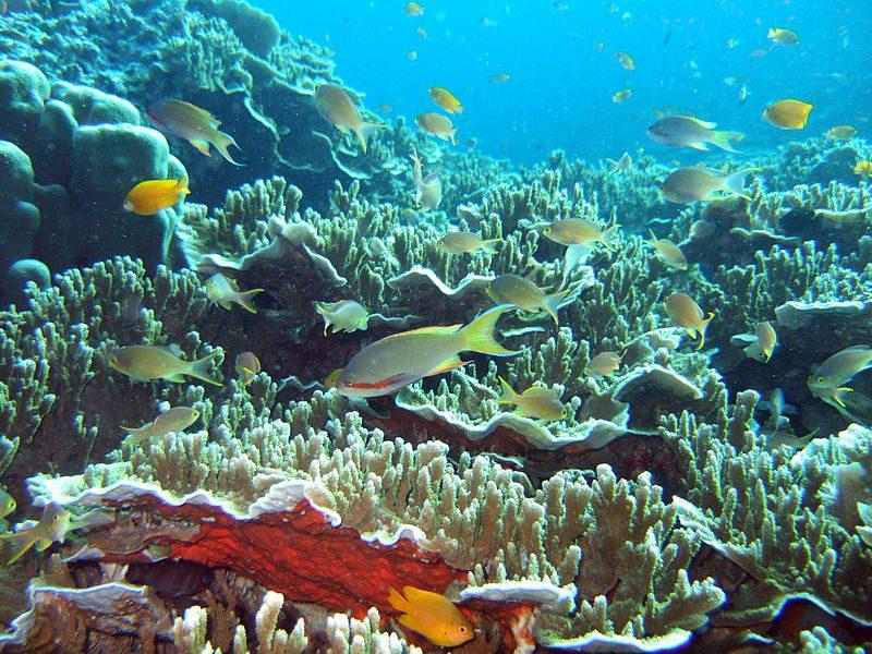 800px-underwater_moalboal_2, MOALBOAL CEBU RESORTS