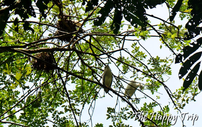 BARAS BIRD SANCTUARY, TACURONG, SULTAN KUDARAT | TRAVEL GUIDE
